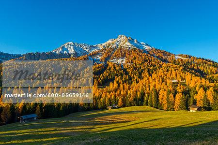 Mountain with Larches in Autumn, Vigo di Fassa, Dolomites, Trentino-Alto Adige, South Tirol, Italy
