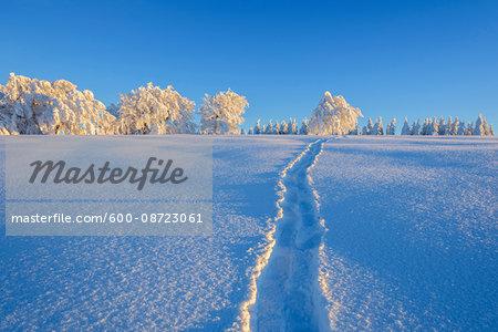 Snow Covered Landscape with Tracks in the Snow in Winter, Schauinsland, Black Forest, Freiburg im Breisgau, Baden-Wurttemberg, Germany