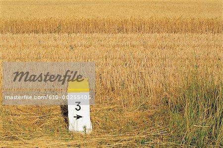 France, Vaucluse, Avignon, wheat field and milestone