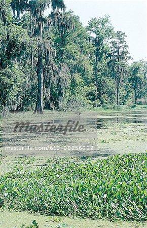 United States, Louisiana, New Orleans, bayou