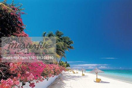 Mauritius, Trou-aux-biches, beach and parasol