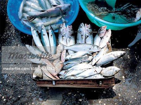 Turkey, Istanbul, Fish market at Rumeli, asian side