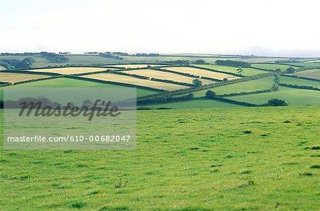 England, Somerset, Exmoor national park