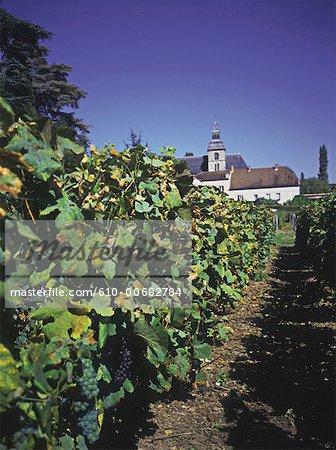 France, Champagne region, Hautvilliers abbey where friar Dom Perignon discovered champagne