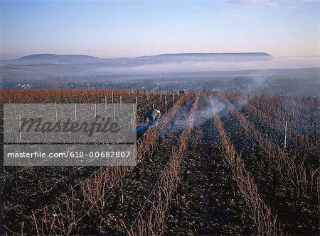 France, Champagne region, Moussy, vineyard