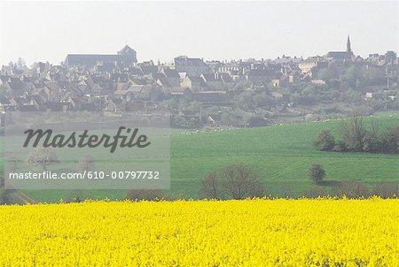France, Normandy, Mortagne au Perche, fields of rape