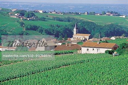 France, Burgundy, Julianas, vineyards