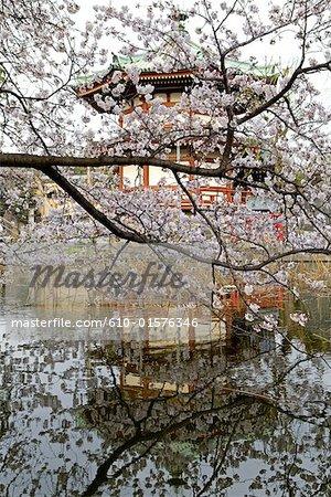 Japan, Tokyo, Ueno Park, pagoda and sherry blossoms