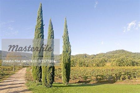 "France, Provence, Ménerbes, garden of the hotel ""La Bastide de Marie"", cypress"