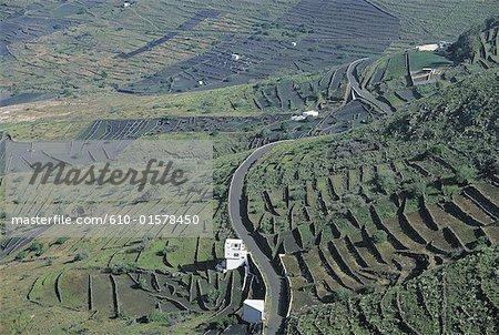 Spain, Canary Islands, Lanzarote, terrace cultivation