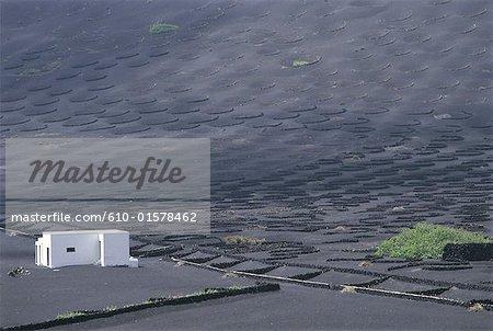 Spain, Canary Islands, Lanzarote, volcanic valley of La Geria, cultivation