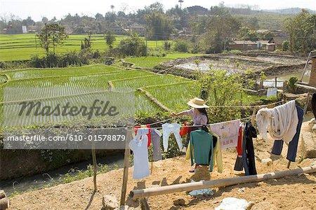China, Yunnan, Xishuangbanna, near Damenglong, ricefields