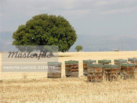 France, Provence, Valensole Plateau, hives