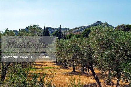 France, Provence, Alpilles
