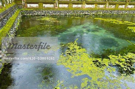 Indonesia, Bali, near Ubud, Tirta Empul temple, pond