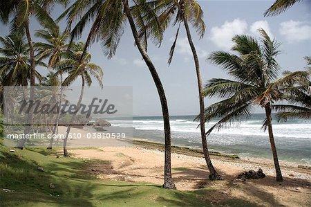 Barbados, Bathsheba, beach