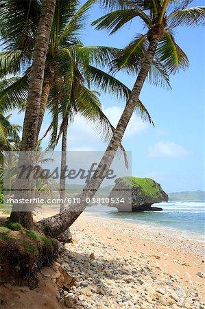 Barbados, Bathsheba, rock