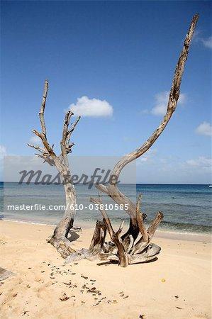 Barbados, Spreightown, wood on the beach