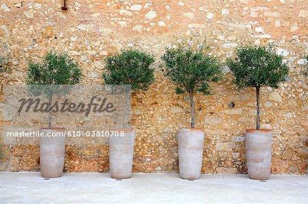 Greece, Crete, Rethymno, olive trees