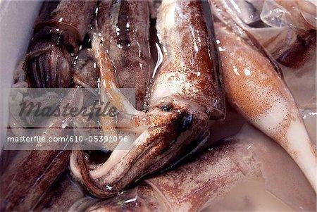 Japan, Tokyo, Tsukiji fishmarket, squids