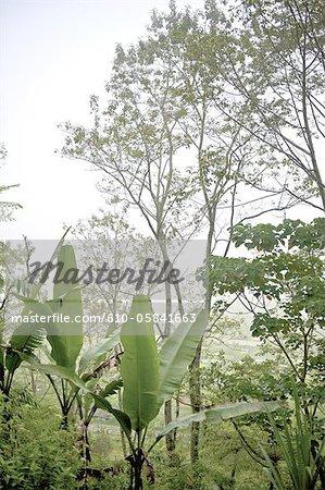 Indonesia, Bali, tropical forest near Bedugul