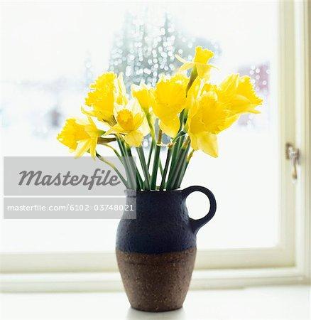 Daffodils in a window.