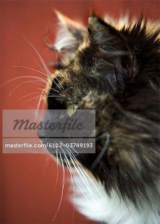 A cat in profile, close-up.