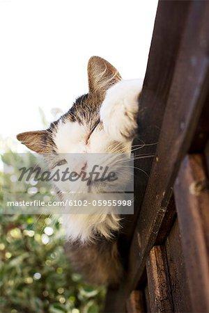 Portrait of lazy cat
