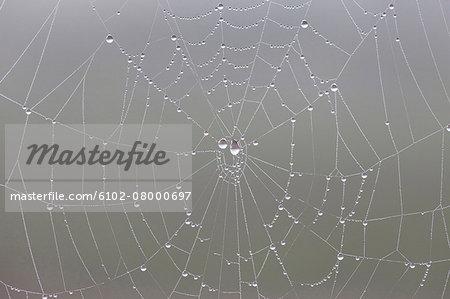 Water drops on cobweb