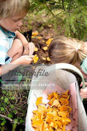 Children picking mushrooms in forest