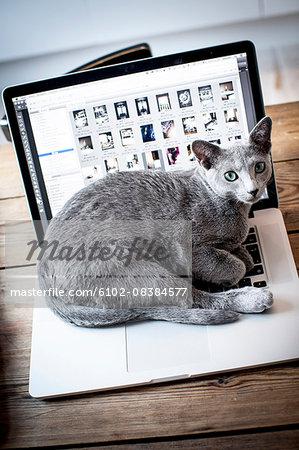 Cat lying on laptop