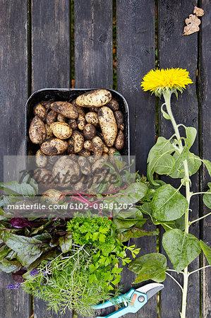 Fresh herbs and new potatoes