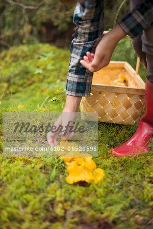 Child picking up mushrooms