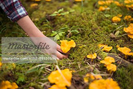 Child picking up mushroom