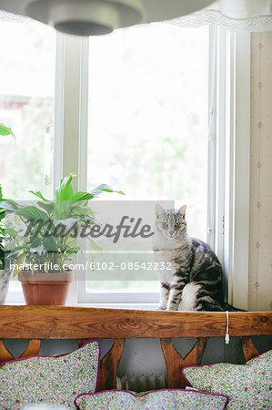 Cat sitting by window