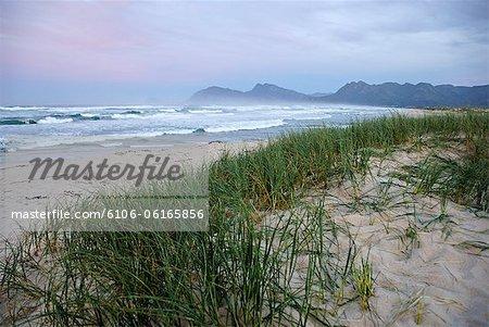 Grass on beach at dawn