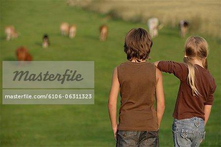 kids watching cows