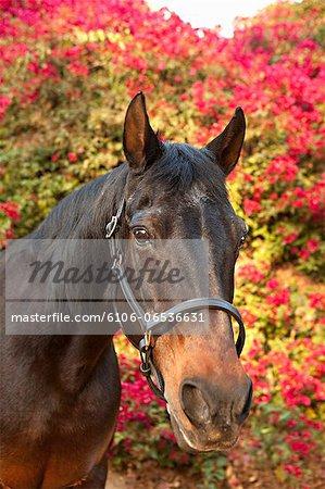 Horse with Bouganvilla