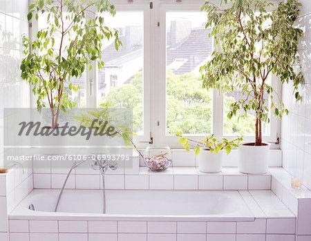 Bathroom interior, plants and windows alongside bathtub