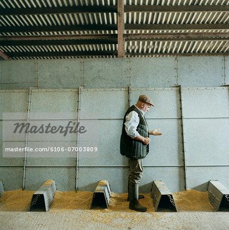 Farmer Examining Grain, Stood in a Metallic Barn