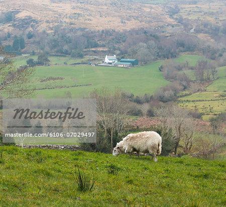 Farmland, County Kerry, Ireland