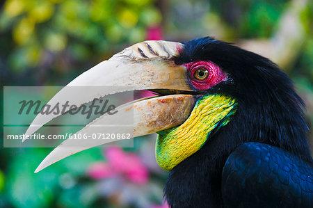 Bird in Ubud.