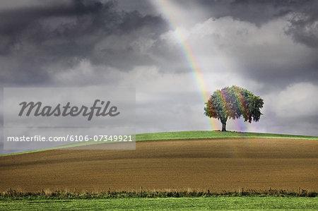 Solitary tree illuminated by a rainbow