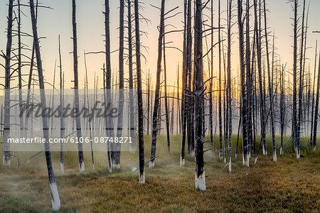 Mineralized trees at sunrise