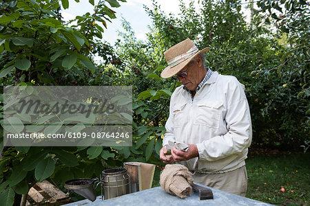 Attentive beekeeper working in apiary garden
