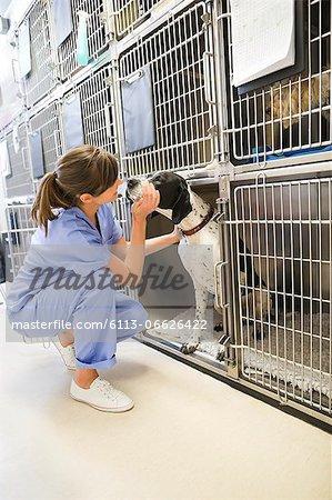 Vet putting dog in kennel