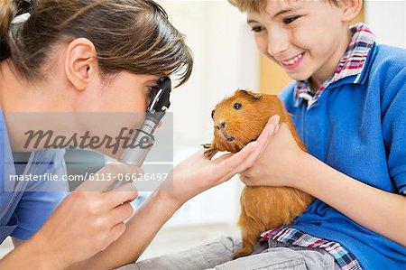 Boy holding guinea pig in vet examination