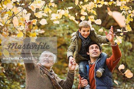 Three generations of men examining leaves