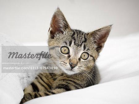 Kitten relaxing in blankets