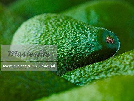 Extreme close up of whole Pinkerton avocados